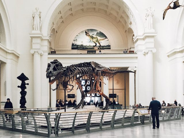 dinosaur skeleton on  display at Chicago's field museum