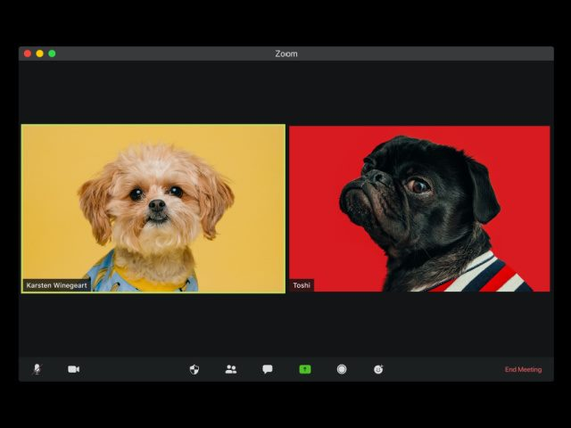 two dogs on a video Zoom call