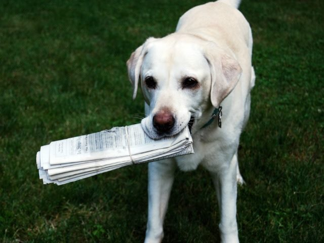 A dog holding the day's newspaper