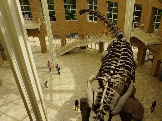 dinosaur skeleton in a museum  with  tourists