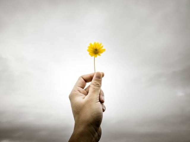 person holding a yellow flower up against a gray sky
